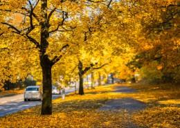 秋天的树林图片(12张)