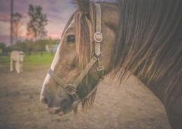 一匹马图片(12张)