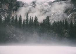 大雾天的森林图片 (13张)