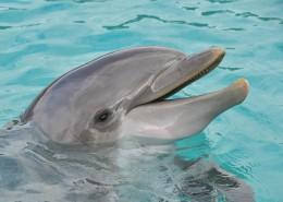 活泼可爱的海豚图片(13张)