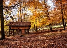 唯美的秋季树林风景图片(13张)