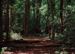 生长茂盛的森林图片(12张)