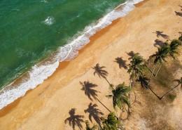 挺拔的椰子树图片(10张)