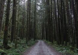 幽静的林间小路图片(14张)