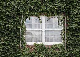 墙上的藤蔓图片(10张)