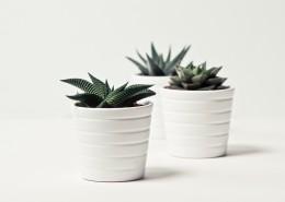 清新的小型植物盆栽图片