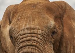 世界上最大的哺乳动物大象图片(10张)