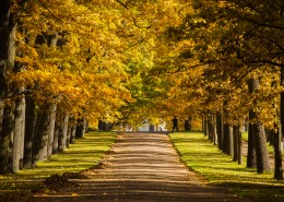 俄罗斯园林园林唯美秋季