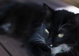 黑色的猫图片(15张)