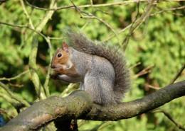 树干上的松鼠图片(12张)