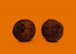 椰子的高清图片(10张)