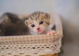 可爱的小奶猫图片(11张)