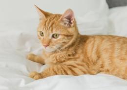 可爱的黄色小猫咪喵星人宠物图片(10张)