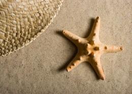 五角海星图片(10张)