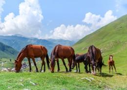 绿色草场上的马图片(10张)