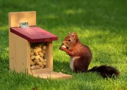 小松鼠图片(10张)