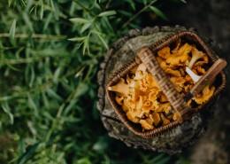 黄色的蘑菇图片(17张)
