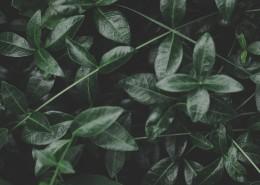 不同形状的绿叶图片(12张)