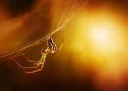 趴在蜘蛛网上的蜘蛛图片(11张)