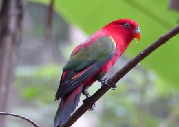 拥有鲜艳羽毛的鹦鹉图片(13张)