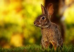 机灵的野兔图片(12张)
