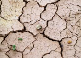 干旱龟裂的土地图片(10张)