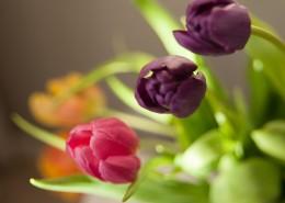 花瓶里的郁金香图片(10张)