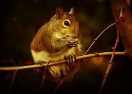 敏捷的小松鼠图片(10张)