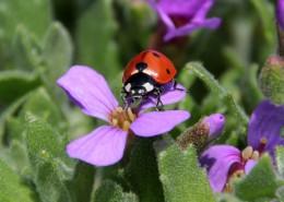瓢虫微距摄影图片(14张)