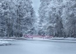 大雪覆盖的树木图片(11张)