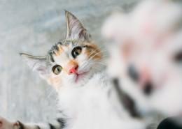 软萌可爱的小猫图片(11张)