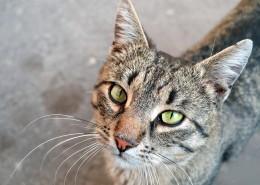 睁大双眼的小猫图片(15张)