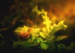 树叶上的蜗牛图片(10张)