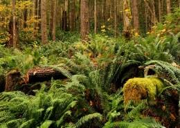 树木茂密的雨林图片(10张)