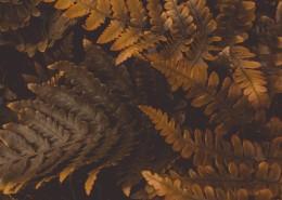 复古色调的树叶背景素材