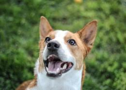 忠诚可爱的狗狗图片(12张)