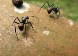 蚂蚁微距摄影图片(15张)