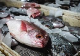 新鲜的鱼图片(10张)