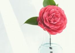 插在花瓶里的鲜花图片(10张)