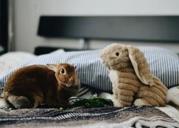可爱的宠物兔图片(10张)