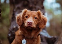 呆萌的宠物狗图片(15张)