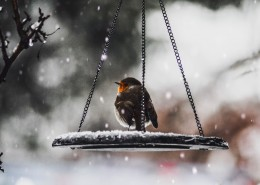 冬天的麻雀图片(9张)