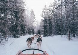 雪地上的雪橇犬图片(9张)