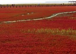 辽宁盘锦红海滩自然风景图片(8张)