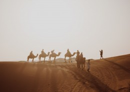 沙漠中成群的骆驼图片(8张)