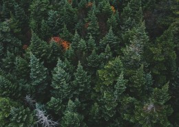 树木茂盛的森林图片(10张)