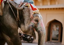 印度的观光大象图片(10张)