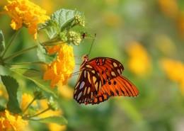 花朵上的蝴蝶图片(15张)