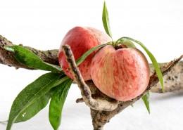 营养丰富香甜诱人的水蜜桃图片(9张)
