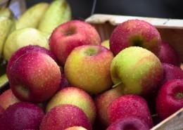 新鲜的苹果图片(16张)